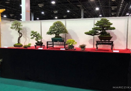 Our bonsai and orchid exhibition at OMÉK 2019