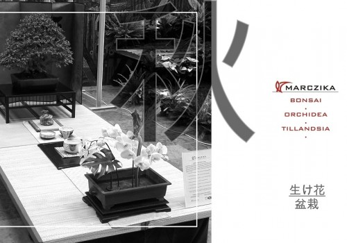 Exhibition of Approaches to Japanese Culture - Bonsai and Orchid
