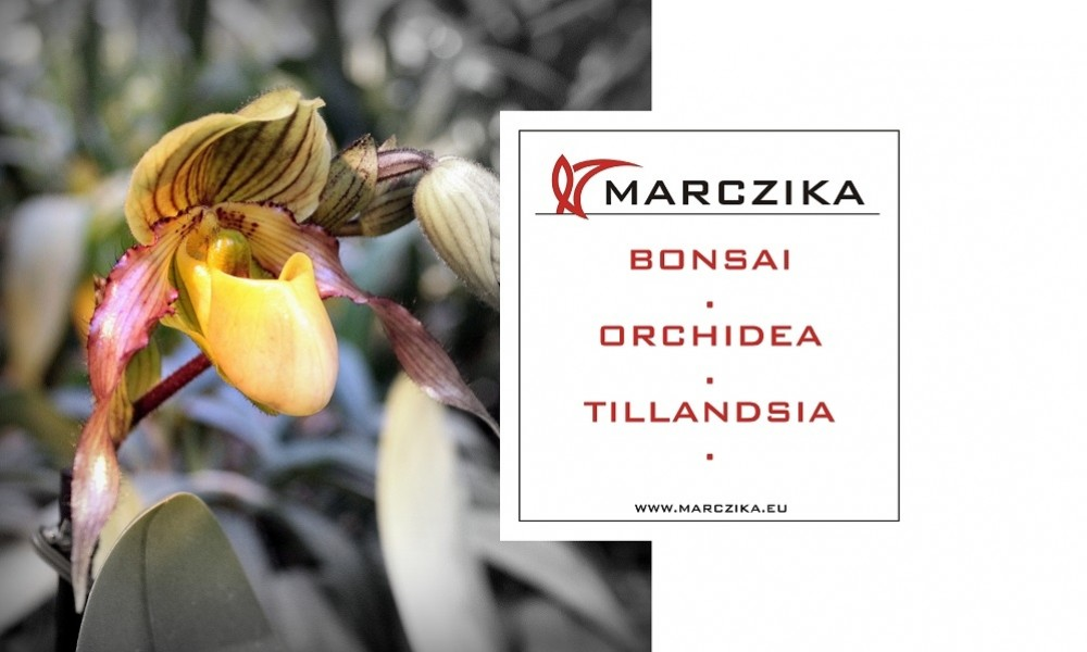 We invite you to a sensational exhibition of orchids and bromeliads!
