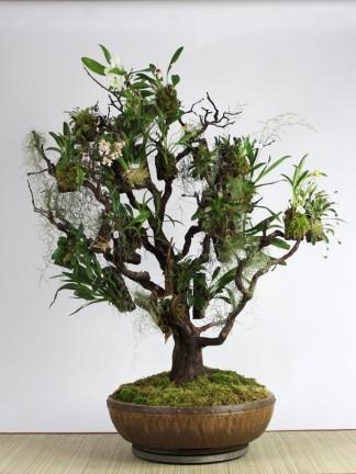 Orchidea dekoráció.