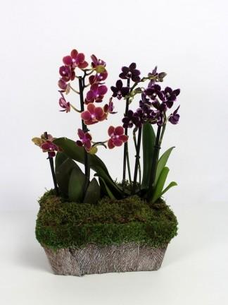 Orchidea kompozició